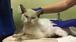 질병으로 두 눈을 못 뜨던 고양이에게 생긴 아름다운