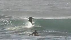돌고래와 충돌해 서핑보드에서 추락한 이 남자는 너무나 기쁘다