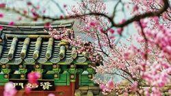 이른 봄 갈 수 있는 서울 고궁