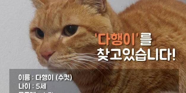 고양이 역장 '다행이'가 한 달 넘게 실종된 상태다. 소홀했던 관리에 비난이 쏟아지고