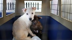 '강아지 공장'에 대한 규제가 이렇게