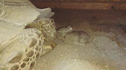 이 토끼와 거북이가 보여준 동화와 현실의