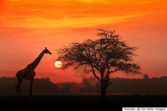 우리가 꼭 깨야 할 아프리카에 대한 5가지