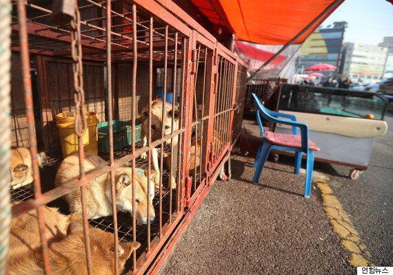 전국 최대 '개고기 시장', 자진철거