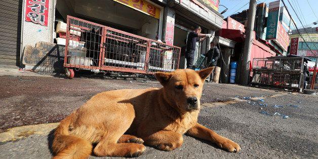 전국 최대 '개고기 시장'이 '자진 철거'하는