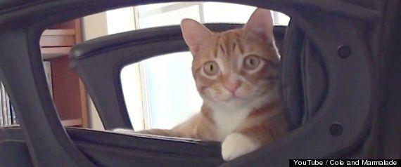 고양이를 좋아하는 사람이라면 부러워할 최고의