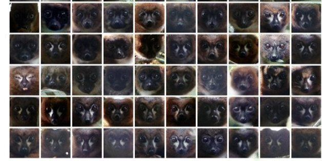 얼굴인식시스템을 이용해 멸종위기 동물을