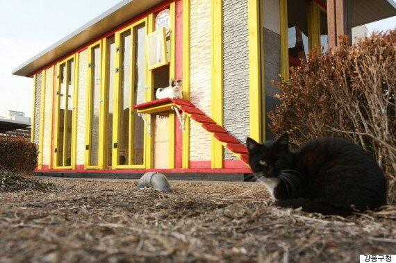 강동구청 건물 옥상에 '길고양이 치료소'가
