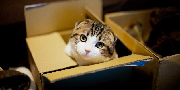Cat in box and looking