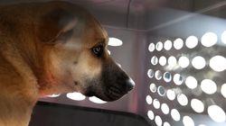 샌프란시스코, '강아지 공장' 개 판매 금지법