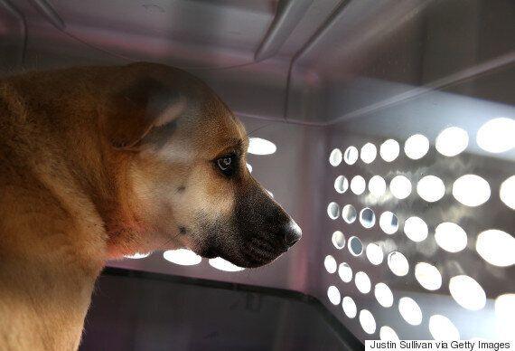 샌프란시스코가 '강아지 공장' 개의 판매를