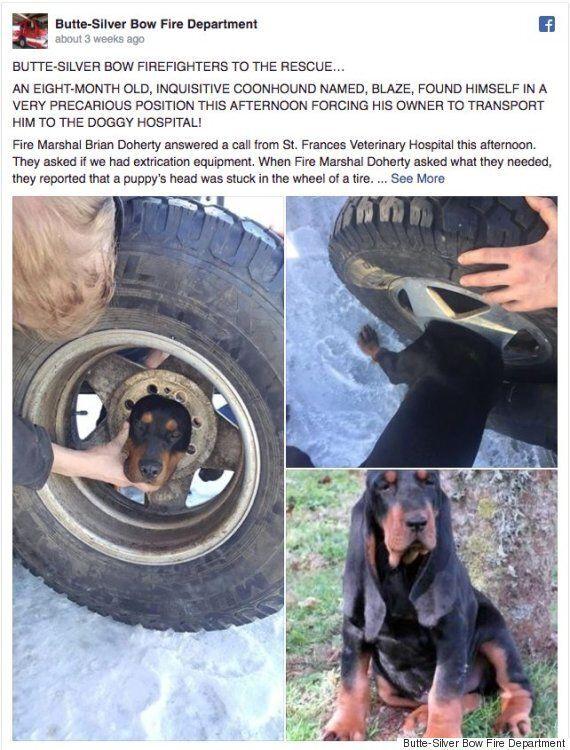 호기심이 많은 개는 집주인이 없는 사이 타이어 휠에 머리를