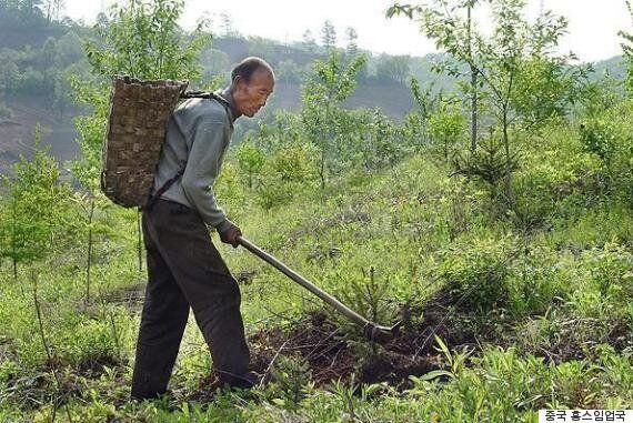 백두산 일대에 30년 동안 나무를 심은 노인의