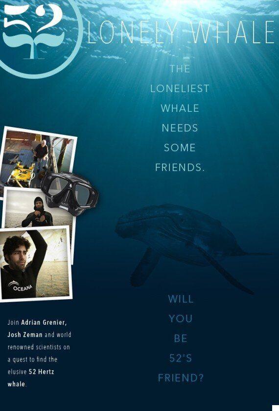세상에서 가장 외로운 고래를