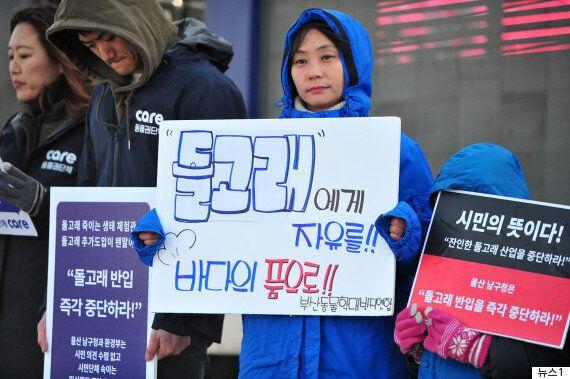 '동물학대' 반발에도 울산 돌고래 수입