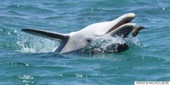 돌고래가 복어를 씹는 게 장난만이 아닌