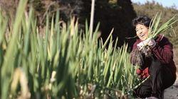 땅은 어디 안 가니까 | 전남 해남에서 대파·봄동 농사짓는 김순복