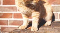 대학가 유명 고양이가 돌연사한 원인이 밝혀지지 않고