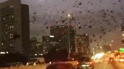 미국 휴스턴의 하늘을 검은 새들이
