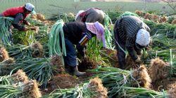 일상적인 성폭력 불안에 노출된 이주여성 농업노동자의