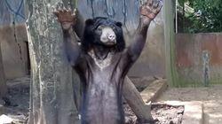 인도네시아 어느 동물원의 곰들은 굶어