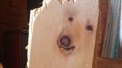 잘려진 나무에서 강아지가