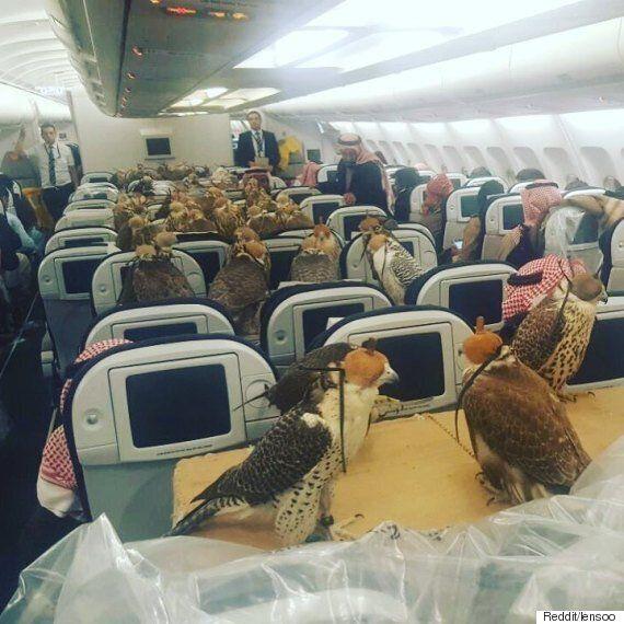 80여 마리의 매가 비행기 이코노미석을