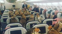 80여 마리의 매가 비행기를