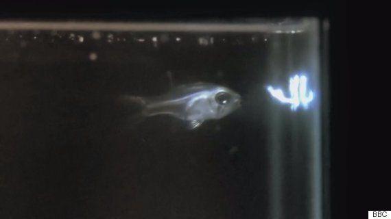 입으로 '불꽃'을 쏘는 물고기가