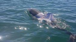'티셔츠에 감긴' 돌고래가 발견됐다(사진