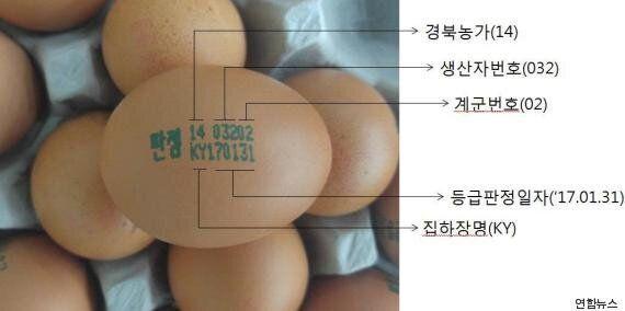 달걀에 적힌 번호로 AI 청정지역 원산지 확인하는