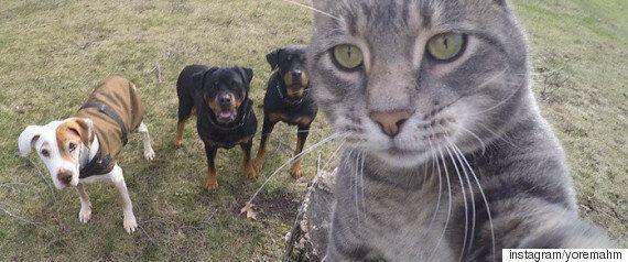 강아지와 고양이가 '쿨내'나는 셀카를