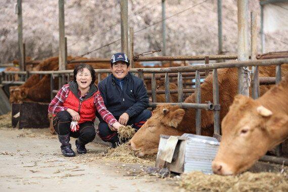 소를 사랑하니까 힘들어도 하는 거지 | 충북 괴산에서 소 키우는 강영식·김계화