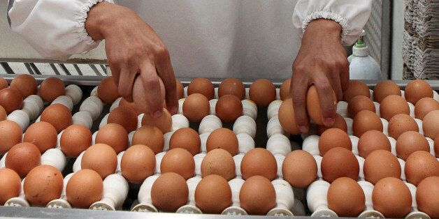 Ecuadorean workers select eggs in a food industry company located close to Ecuador's Tungurahua volcano...
