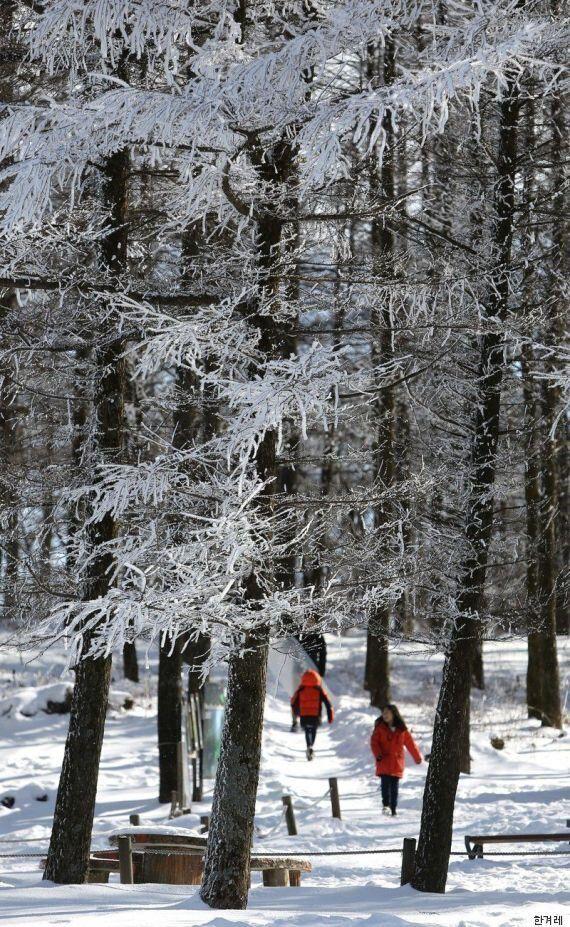 추위를 잘 타는 사람들을 위한 겨울 강원도 드라이브 여행