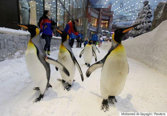 독일 의사들이 제시한 빙판 위 낙상사고를 예방하는 걸음걸이