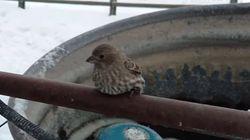 쇠파이프에 발이 얼어붙은 참새를 구출하다