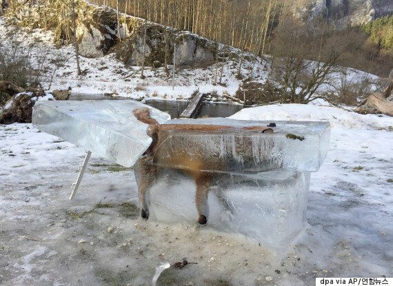 이 여우의 사체는 자연이 얼마나 잔인할 수 있는지를