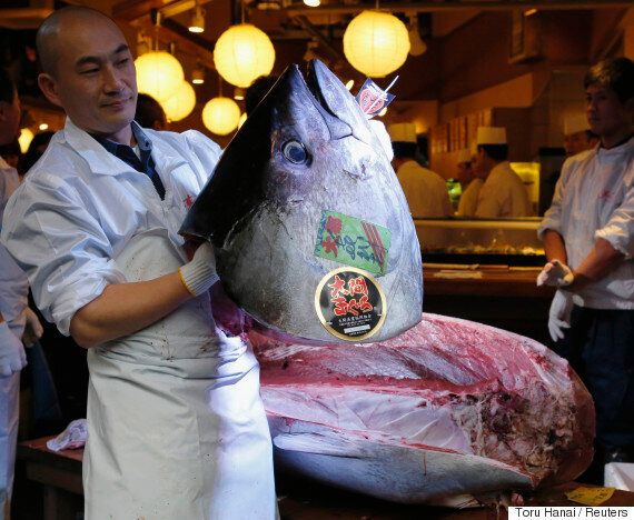 이 남자는 7억 6천만원을 주고 생선 한 마리를
