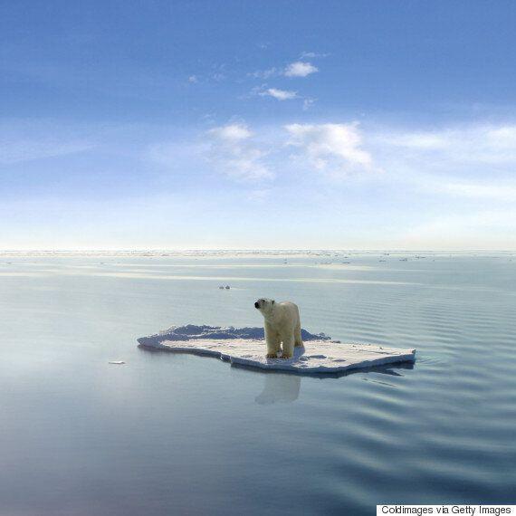 이것은 북극곰 멸종을 막을 마지막