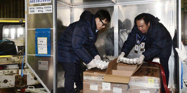 농림축산검역본부 관계자들이 12일 오후 인천공항 아시아나항공 화물터미널에서 미국으로부터 수입된 샘플용 달걀을 검역하고 있다. 이어 오는 14일과 15일 양일간 네 차례에 걸쳐 국내...