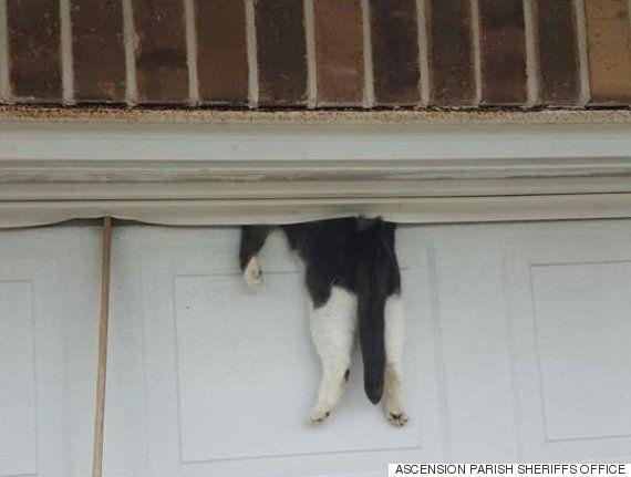 동네 고양이 한 마리가 차고 문에 몸이