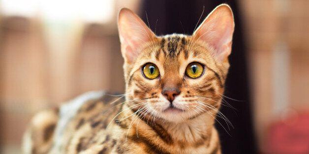 경기 포천서 고양이 AI 감염 의심사례