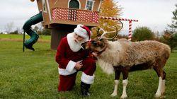 이 아이는 산타의 순록을 그리고