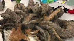 정말 오랫동안 털을 관리하지 못한 고양이가