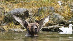 절묘하게 찍힌, 올해 가장 유쾌한 동물 사진