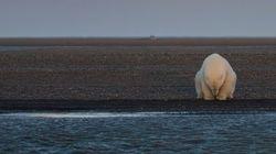 북극곰 사진을 찍으러 알래스카에 간 사진가는 놀랍도록 슬픈 사실을