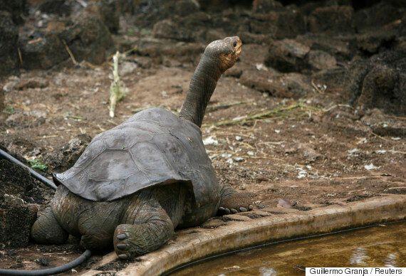 인간은 동물 12종을 최근에 죽여서 멸종시켰고, 당신은 전혀 알지