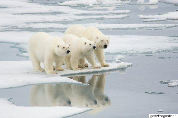 무한도전 '북극곰의 눈물'에서 속 정준하가 읽던 책을