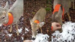 사냥꾼은 이 사슴에게 총을 쏠 수